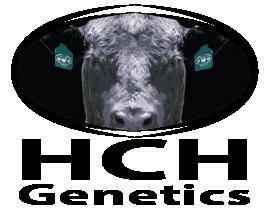 HCH Genetics - Elite Beef Genetics